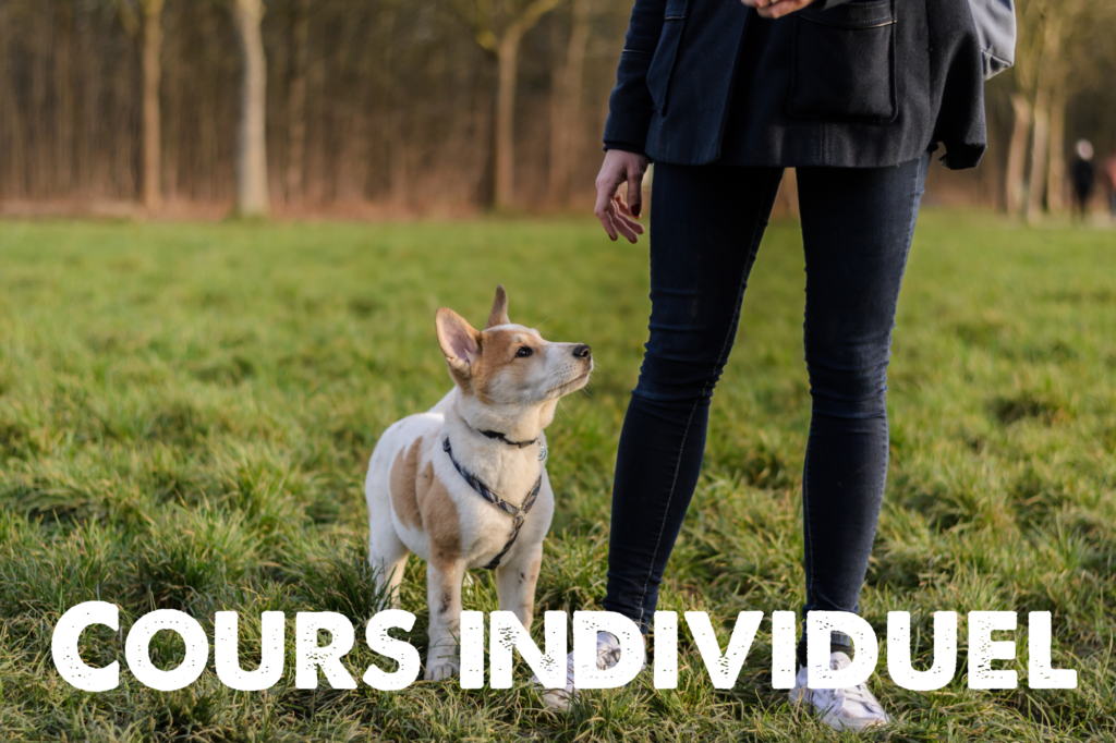 éducation canine cours individuel lille - odigos éducation