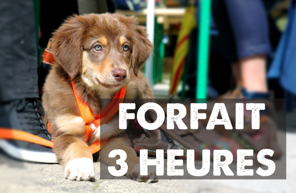 éducation canine lille - odigos éducation - forfait 3 heures