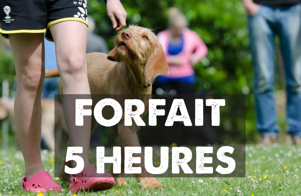 éducation canine lille - odigos éducation - forfait 5 heures